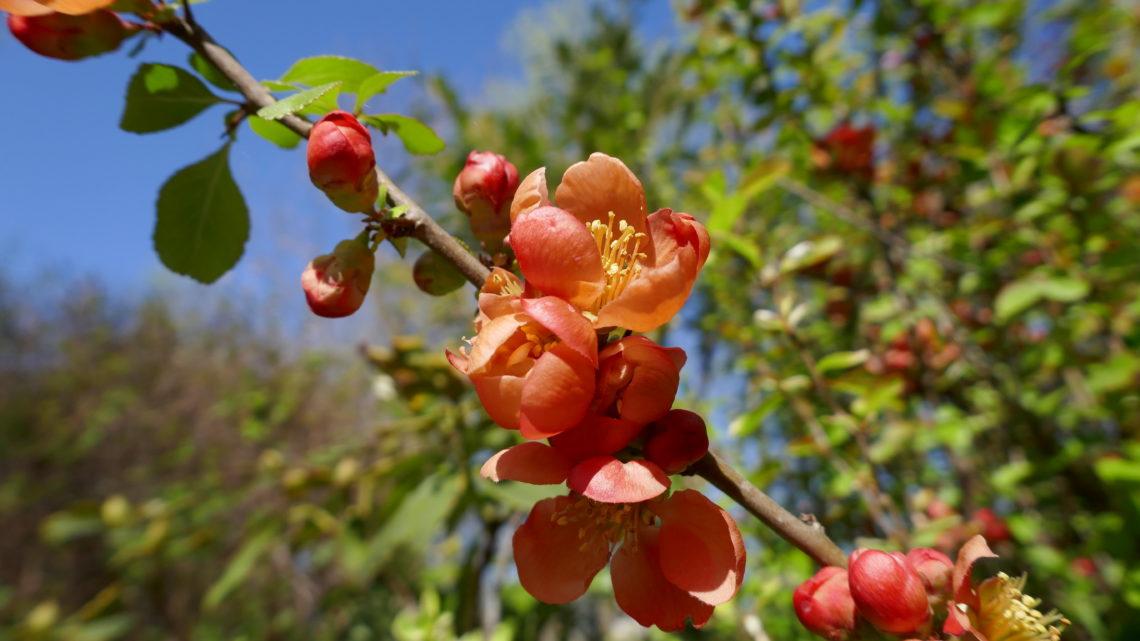 Blomsterdagbog 2019: Flere dejlige farver