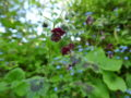 Blomsterdagbog 2019: Regndans