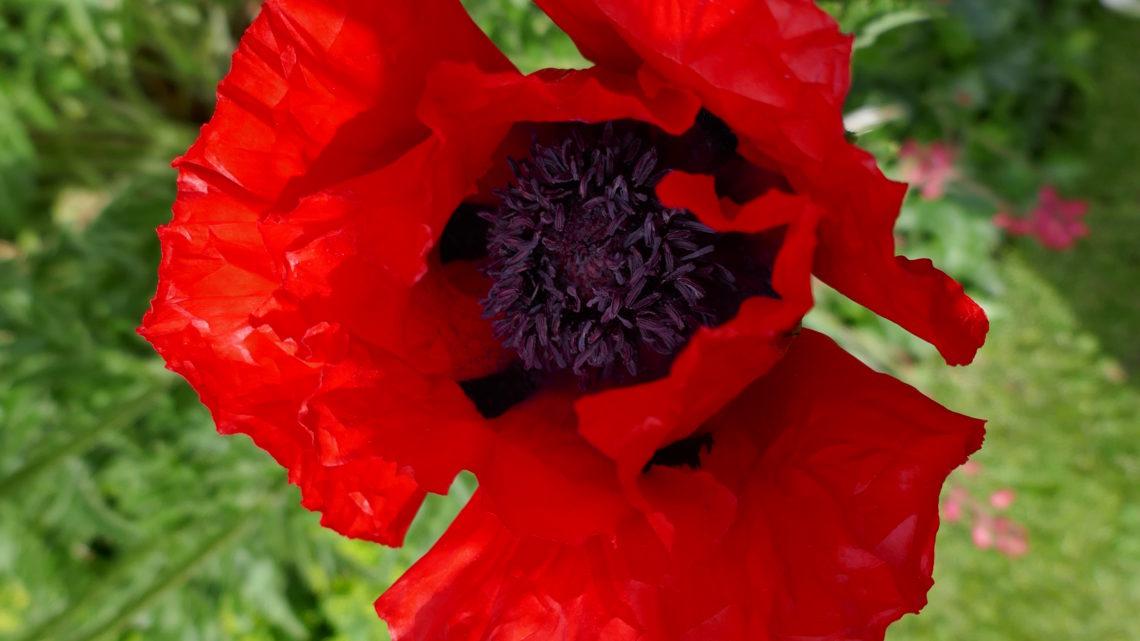Blomsterdagbog 2019: Flower Power