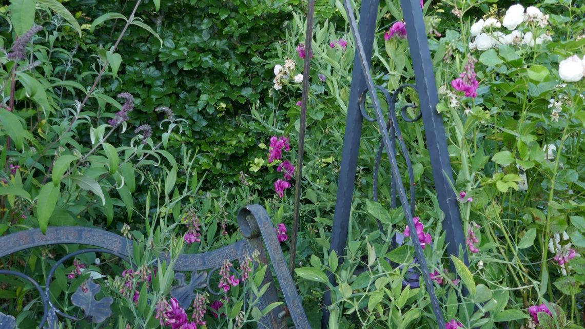 Blomsterdagbog 2019: Ferie i egen have